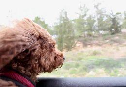 Собака любит смотреть в окно