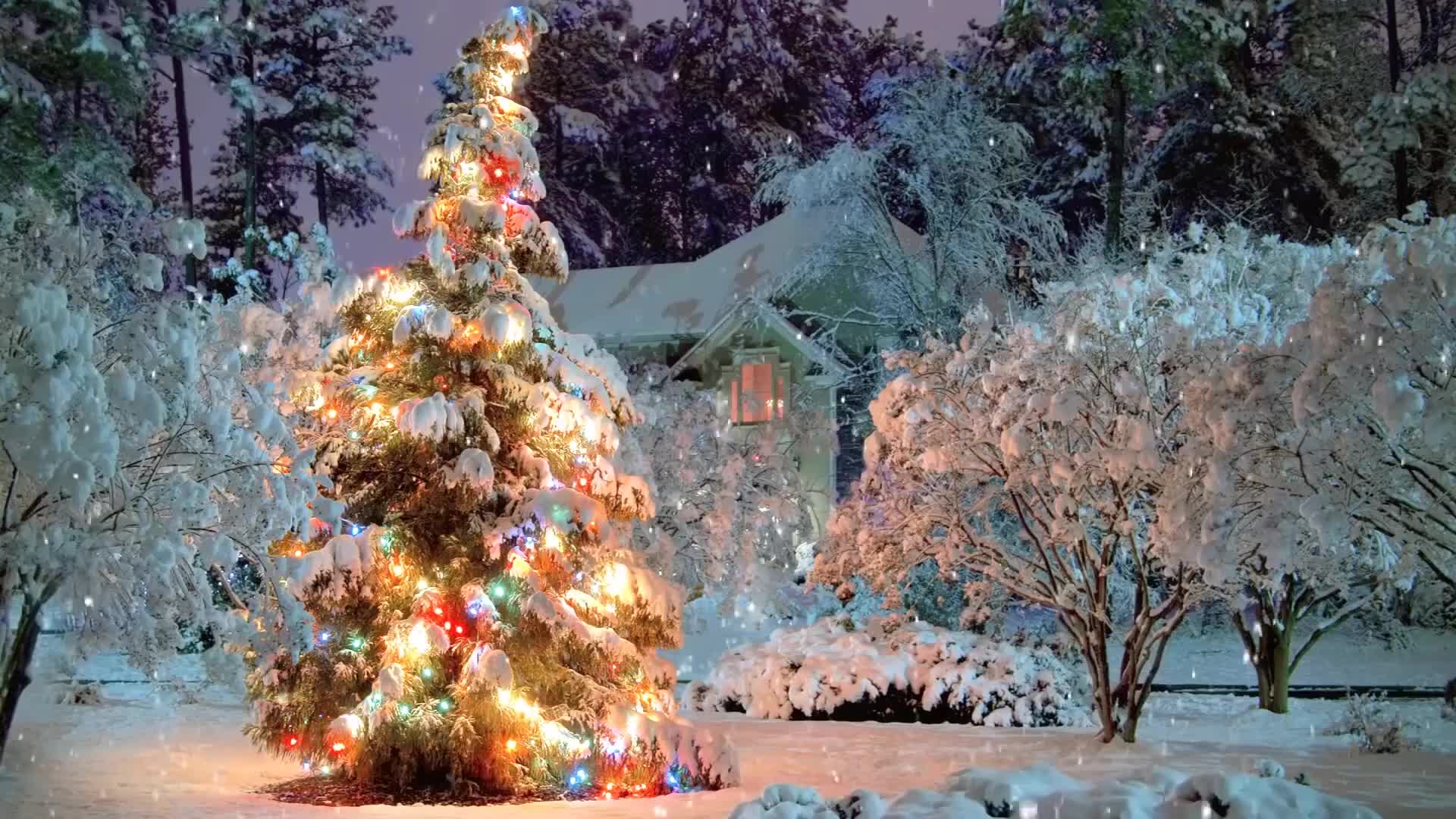 Рождественская ёлочка - живые обои