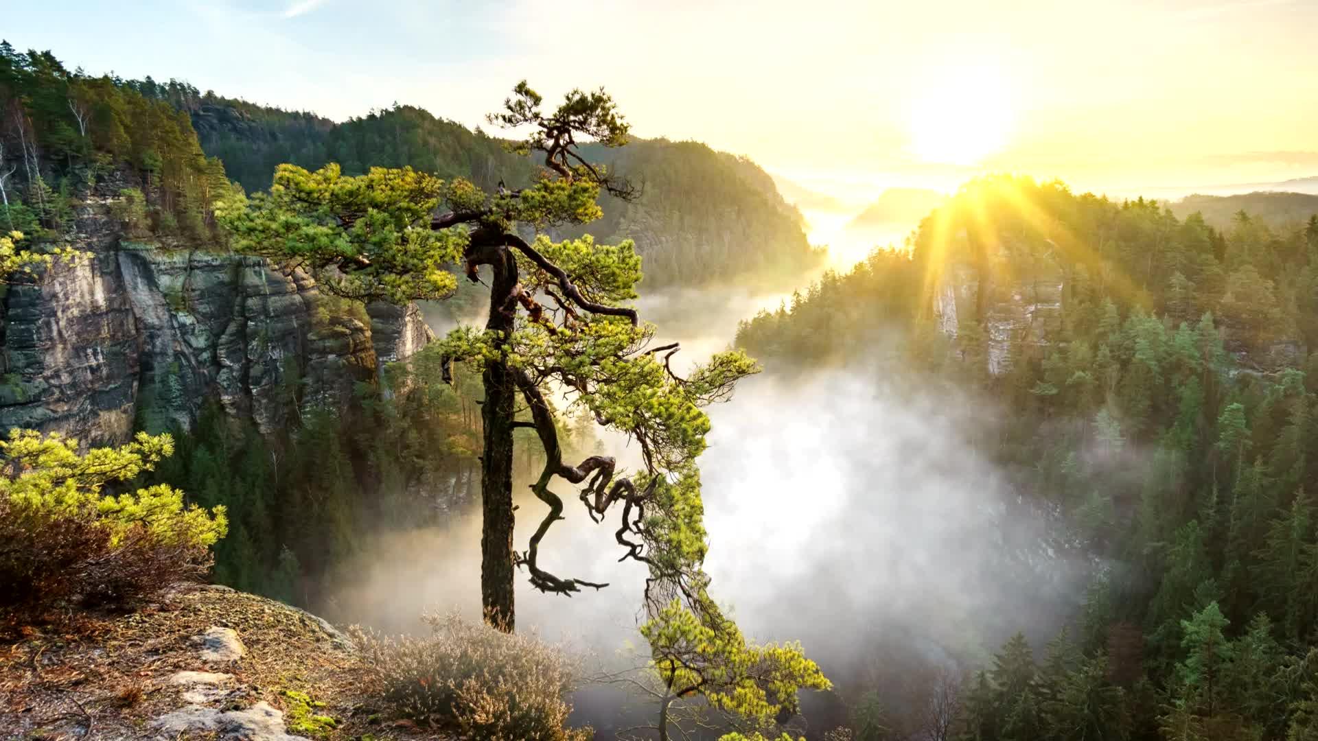 Красивое дерево с падающими листьями - живые обои