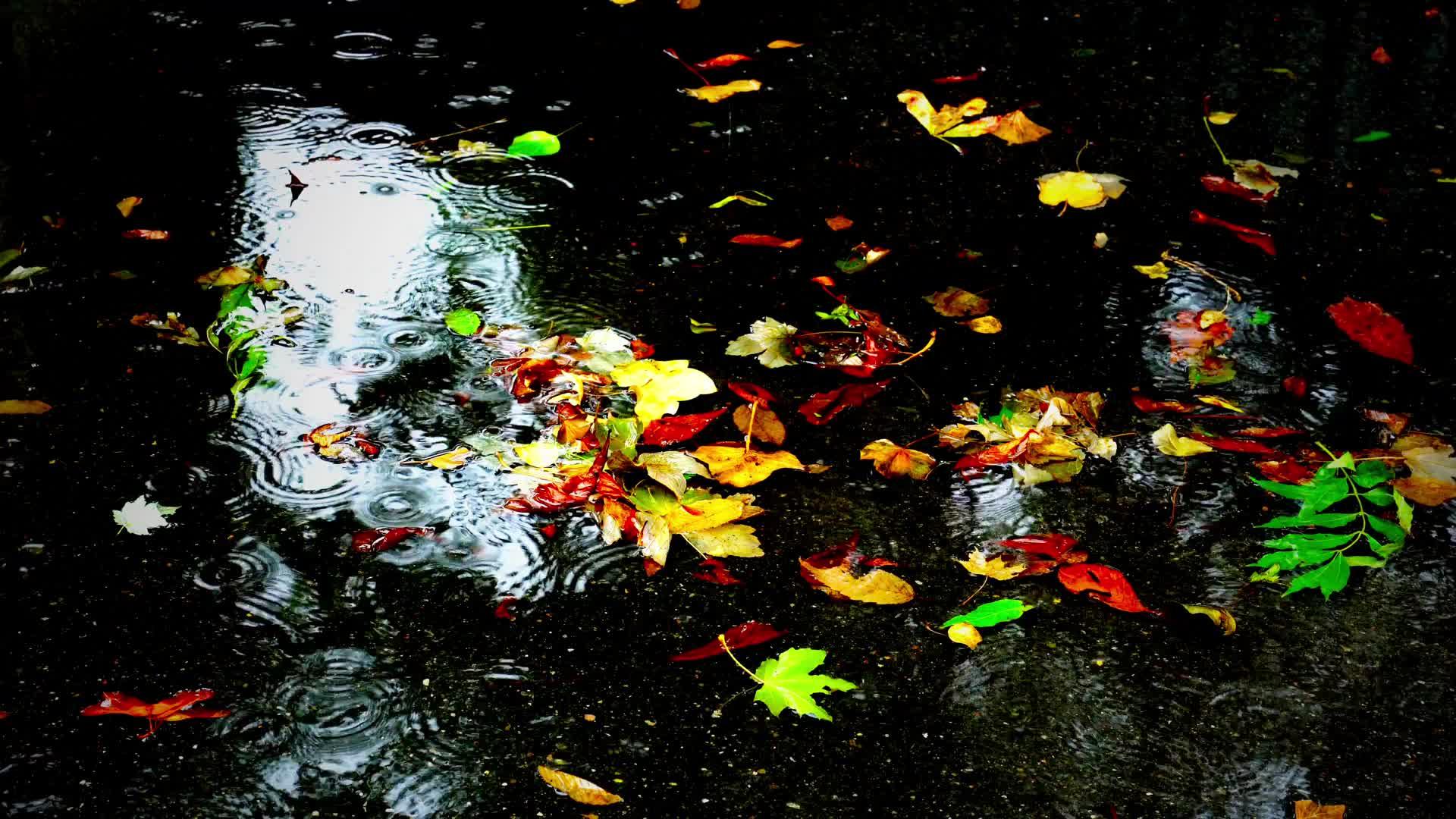 Дождливая осень - живые обои